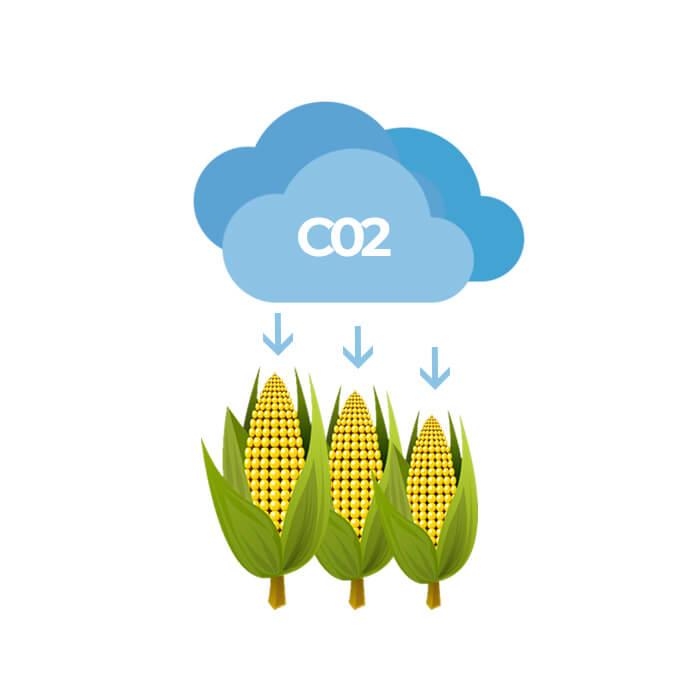 maïs capture stockage c02
